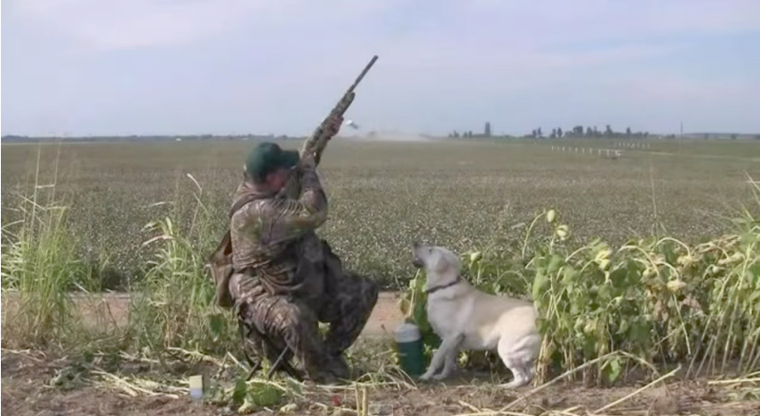 Dove-Hunting