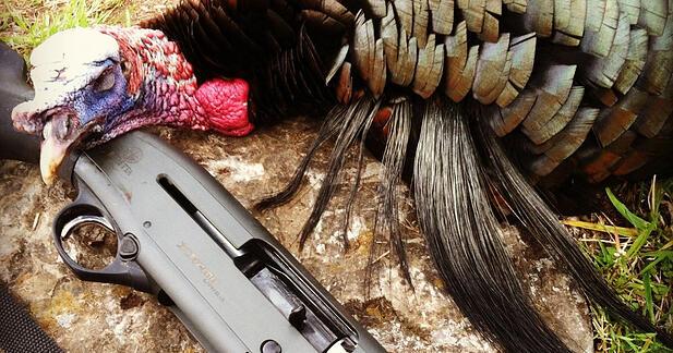 turkey-hunting-thumb