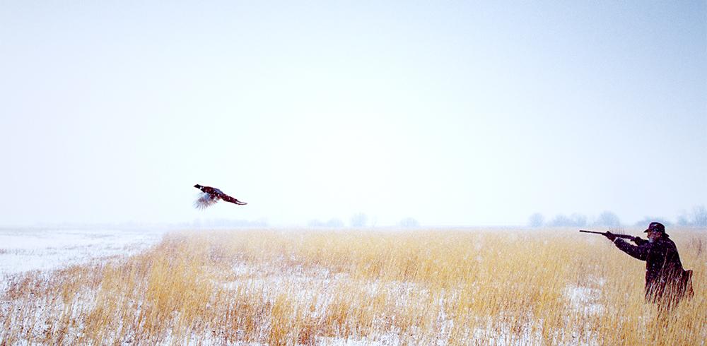 Pheasant-Hunt-Cover