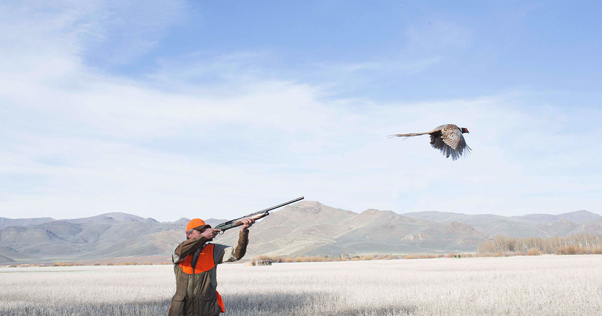 positioning-in-upland-hunting