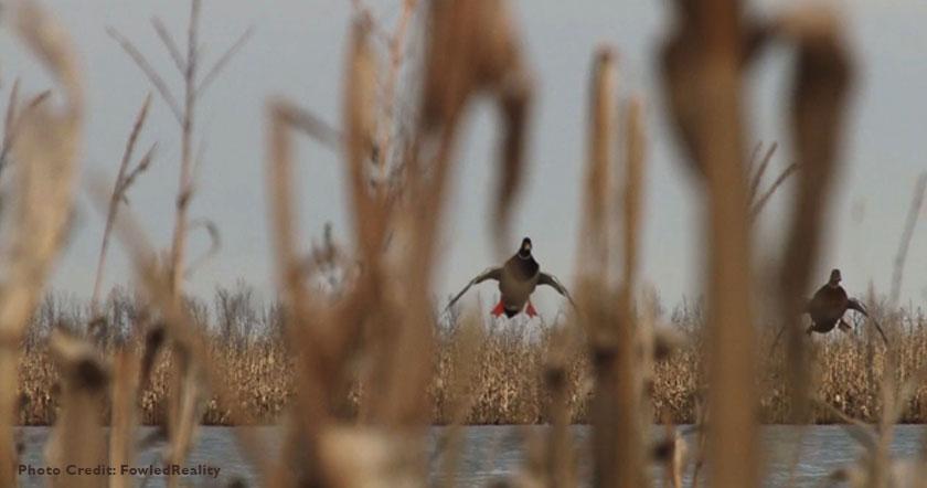 waterowl-hunting-and-farmer-bill-1.jpg