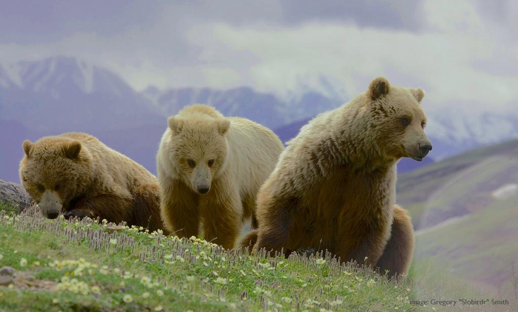 Russian-hunt-with-sako-and-beretta.jpg