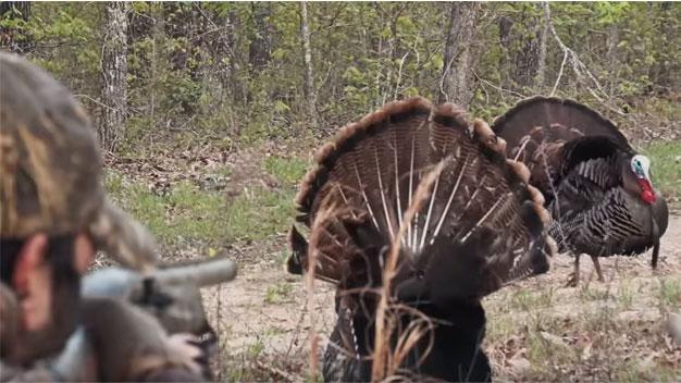 turkey-hunting-tips-for-beginners.jpg
